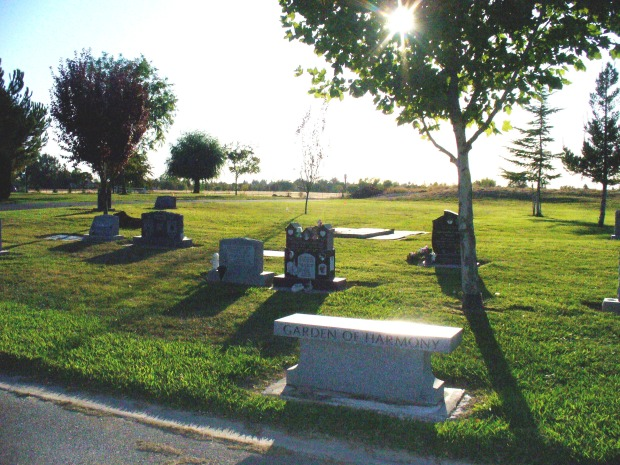 Rindy's gravesite, with the young tree in the center of the photo