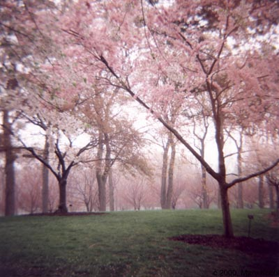 A Forest of Pink Trees